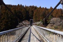 对称吊桥透视在自然森林里 库存照片