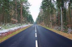 对称和汇合在黑森林里 免版税库存照片
