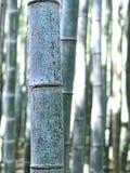 对竹棍子的特写镜头宏观视图在森林庭院里 库存照片