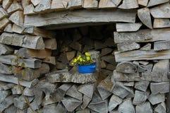 对箱从树的花 免版税库存照片