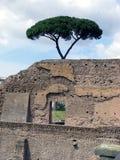 对结构树的下罗马废墟 免版税库存照片