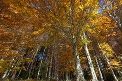 对结构树的秋天天空 免版税图库摄影
