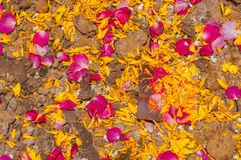对罗斯和万寿菊瓣背景的特写镜头 免版税库存照片