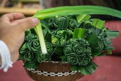 对罗斯花的老师绿色新Pandan花工艺防臭剂目的 库存图片