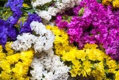 对美丽的五颜六色的Statice的特写镜头开花背景 免版税图库摄影