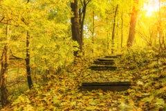 对美丽的秋天森林的楼梯 图库摄影