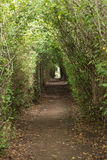 对老公墓的小径和历史的洋梨树在Genadendal 免版税库存照片