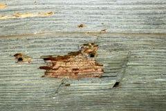 对老建筑木头的昆虫攻击 免版税库存图片
