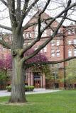 对自然历史的剑桥, MA,美国哈佛博物馆的入口  免版税库存照片