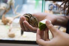 对花栗鼠的哺养的果子 库存照片