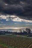 对葡萄园的bodensee接近的德国meersburg 图库摄影