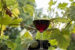 对葡萄酒杯和葡萄 免版税库存照片
