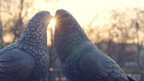 对葡萄酒白色鸽子由古铜和太阳背景制成 小雕象鸽子由金属制成 两个小雕象  股票录像
