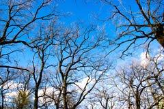 对蓝天和云彩的看法通过老橡树braches 免版税库存照片