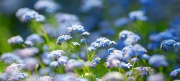 对蓝色春天的看法在公园开花 图库摄影