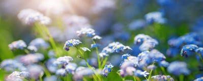对蓝色春天的看法在公园开花 库存图片