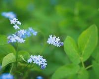 对蓝色春天的看法在公园开花 库存照片