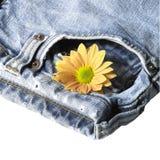 对蓝色牛仔裤和花 库存图片