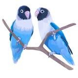对蓝色被掩没的爱情鸟 库存照片