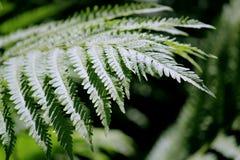 对蕨植物细节的清早阳光画的注意在后院庭院离开 库存图片