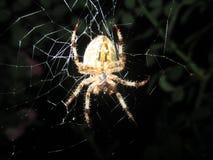 对蜘蛛的恐惧 库存图片
