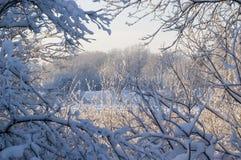 对视窗冬天 免版税库存图片