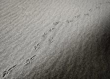 对角鸟脚印在沙漠 免版税库存图片