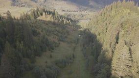 对近夏天喀尔巴阡山脉的森林和山的鸟瞰图由Dzembronya村庄 股票视频