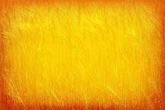 对金麦子背景小插图框架的桔子 免版税库存照片
