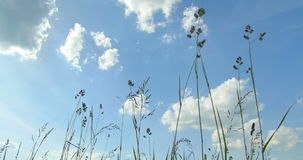 对顶视图的底部 通配的草本 云彩 美好的春天 股票视频