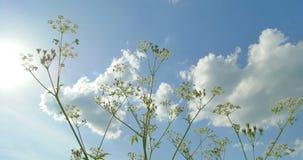 对顶视图的底部 通配的草本 云彩 美好的春天 影视素材