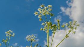 对顶视图的底部 通配的草本 云彩 美好的春天 Timelapse 影视素材