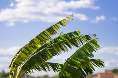 对风的叶子 库存图片