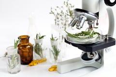 对食物杀虫剂的分析在实验室检查迷迭香 免版税库存照片