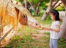 对马的女孩哺养的红萝卜在一个农场在泰国 免版税库存图片