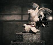 对鸽子 免版税图库摄影
