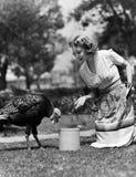 对柴刀的妇女诱使的火鸡用玉米(所有人被描述不更长生存,并且庄园不存在 供应商保单Th 库存图片