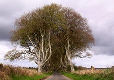 对黑暗的树篱的词条,北爱尔兰 免版税库存照片