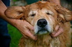对他的狗和忠实的朋友的爱 免版税库存照片