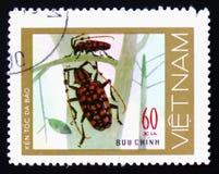 对绿色察觉了与长的天线的甲虫在不生叶的植物,大约1977年 库存图片