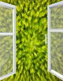 对绿色抽象的被打开的窗口 库存图片