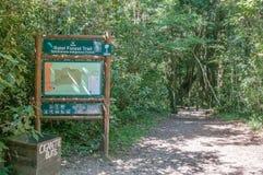 对1000年黄色木材树的足迹 免版税库存图片