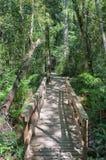 对1000年黄色木材树的足迹 库存照片