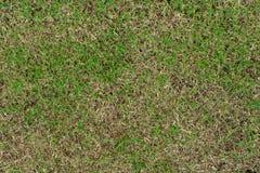 对绿色草坪的损伤 免版税库存图片