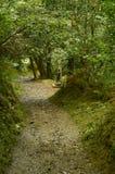 对Busgosu大师和Of The Forest On阁下图的到来Encantau Camin的路线在利亚内斯中委员会  自然 免版税库存图片