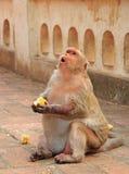 对Khao Luang洞的几乎猴子入口 免版税库存图片