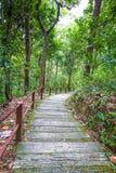 对Siriphum瀑布的楼梯 库存图片