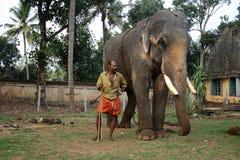 寺庙大象由他们的mahouts护航 库存照片