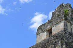 寺庙我,蒂卡尔,危地马拉 免版税图库摄影