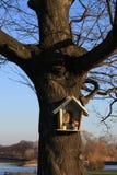 寺庙结构树 图库摄影